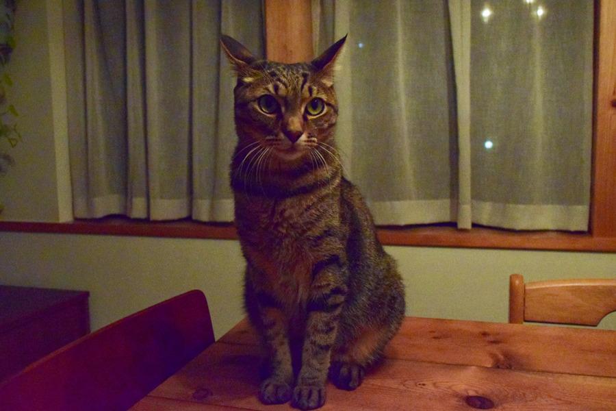 テーブルの上の虎ノ介