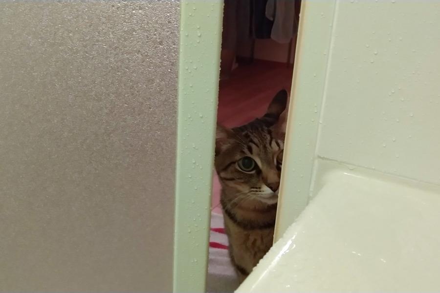 お風呂の扉を開けて中を覗き込む虎ノ介