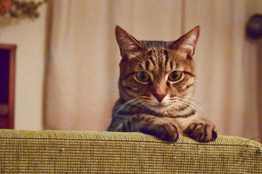 ソファーから顔をだす虎ノ介