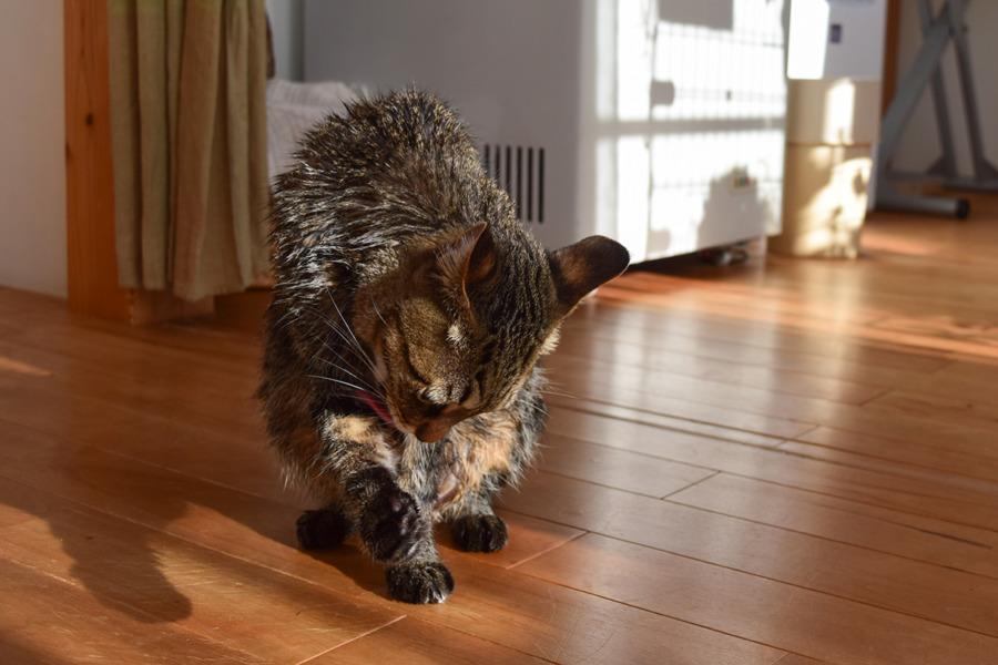 毛づくろいする虎ノ介