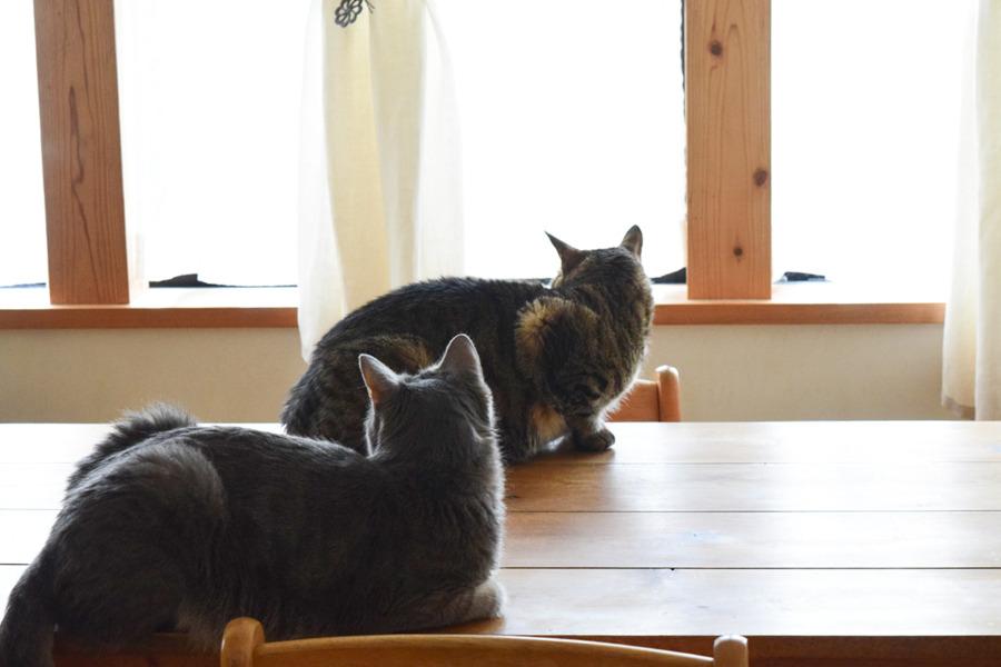 テーブルから外をチェックする虎ノ介と春太