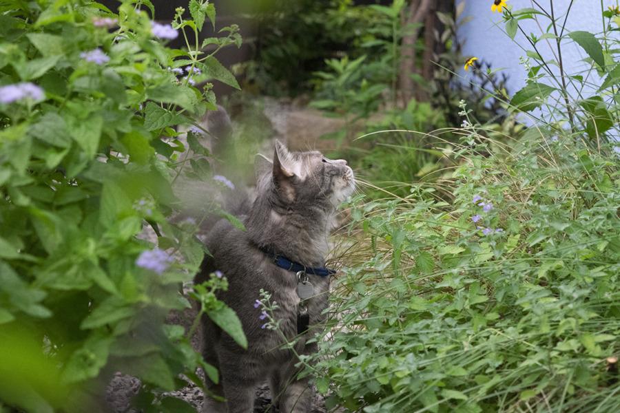 庭を探索する春太