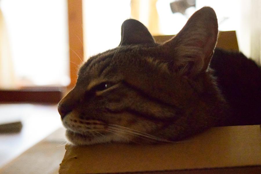 箱で眠る虎ノ介