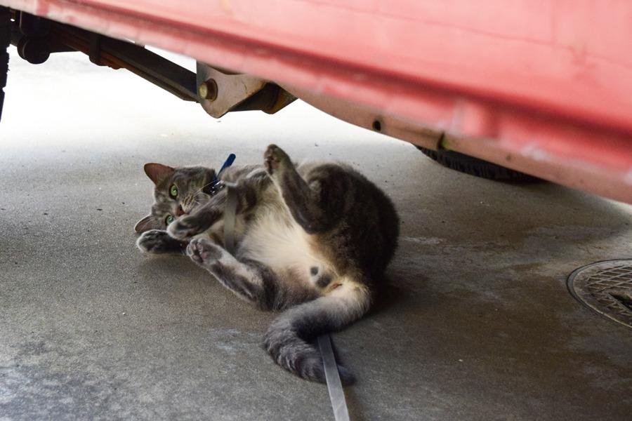 車の下で転がる春太