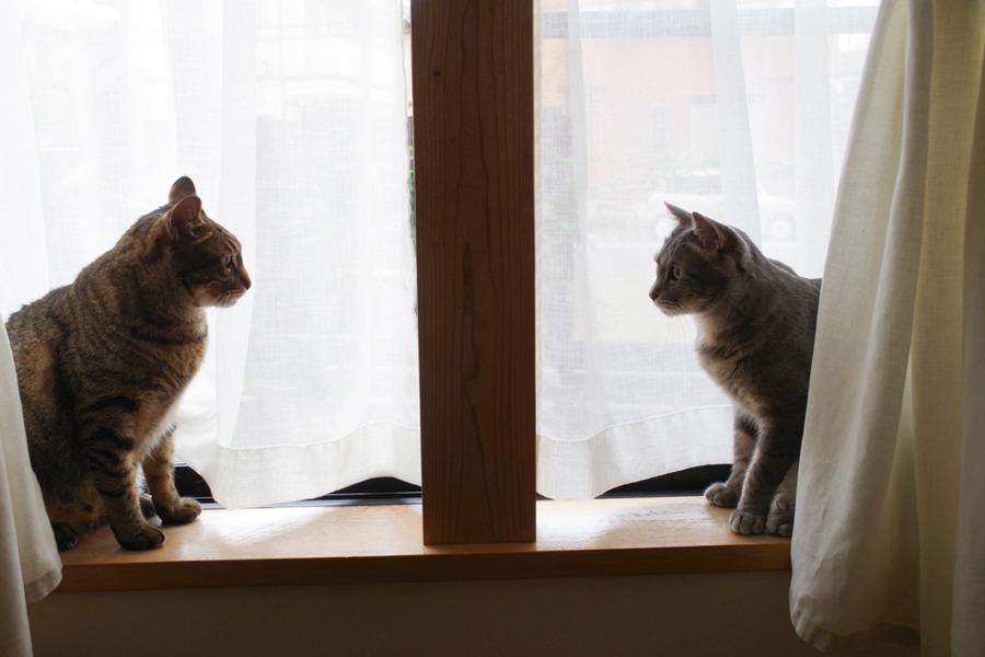 窓で柱を挟んで向かい合う2匹