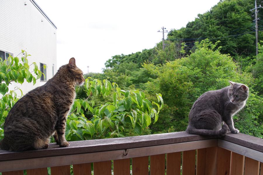 外をチェックする春太と後ろで見守る虎ノ介