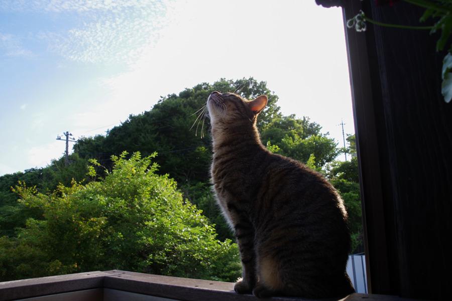 空を見上げる虎ノ介