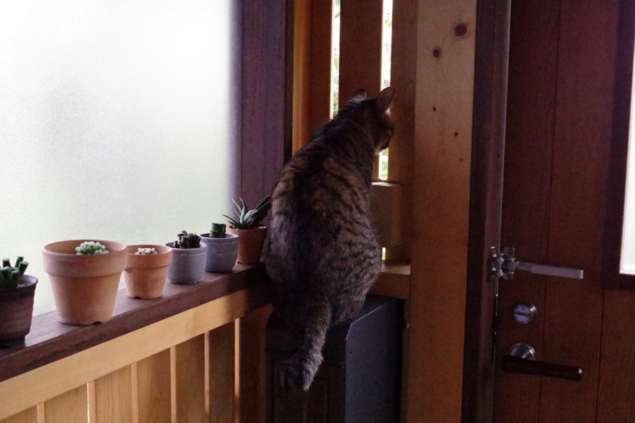外玄関に出された虎ノ介