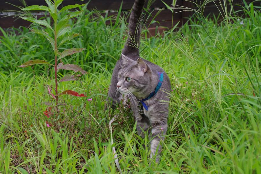 家の前の空き地を散歩する春太