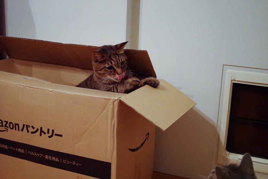 春太を見つけて箱からでようとする虎ノ介