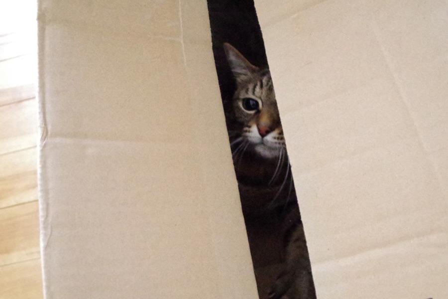 箱にはいって満足気な虎ノ介