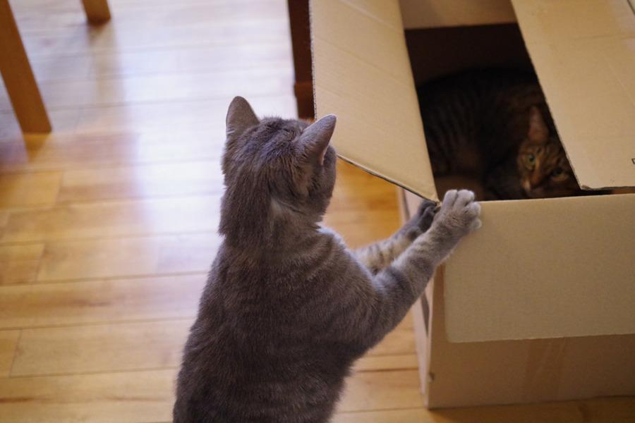 箱を押す春太と不安げに見る虎ノ介