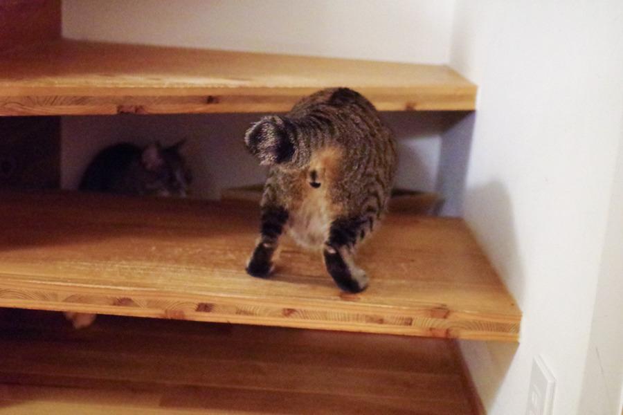 カサカサに惹かれて階段下を覗く虎ノ介