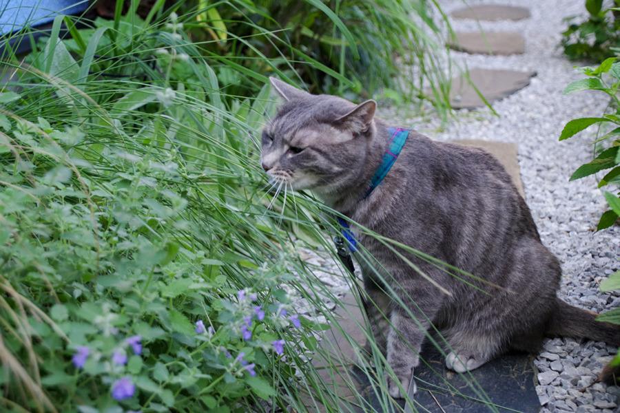 草をひっぱる春太