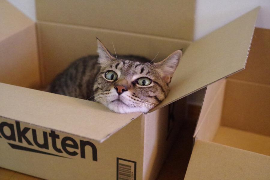 新しく届いた箱にはいる虎ノ介