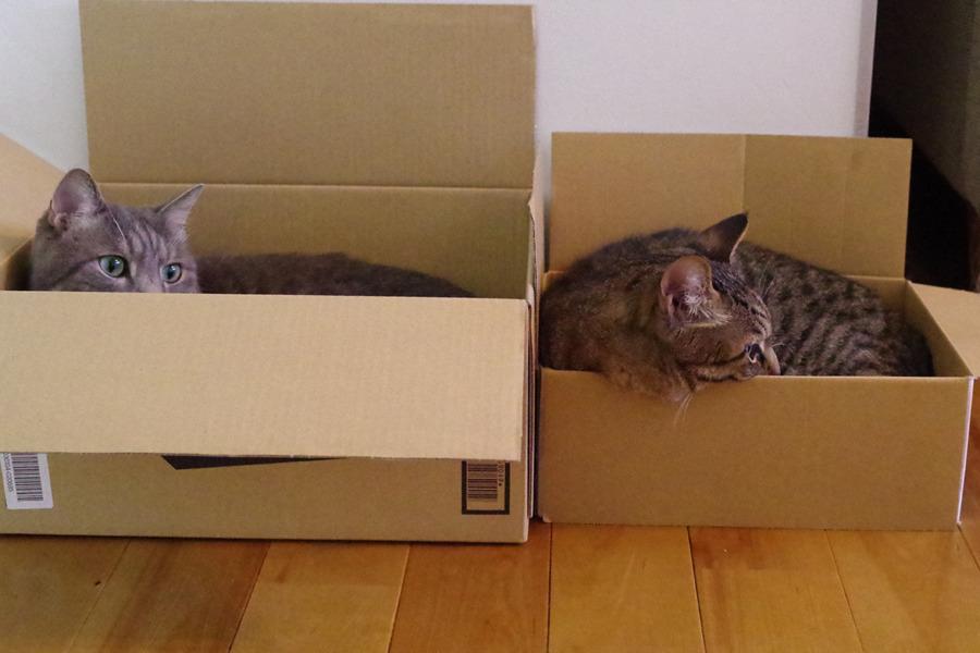 並んで箱に入る虎ノ介と春太