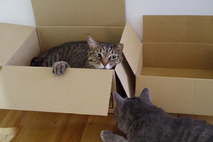 箱の中から春太を見る虎ノ介