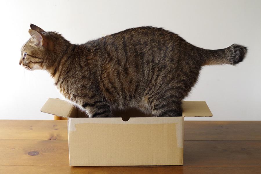 箱に入ってみる虎ノ介