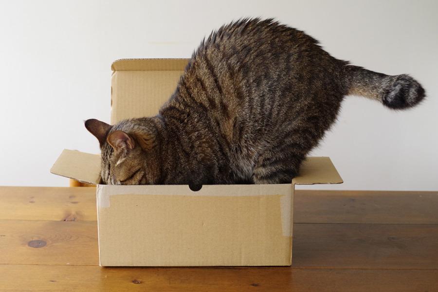 箱の中に顔をいれてみる虎ノ介
