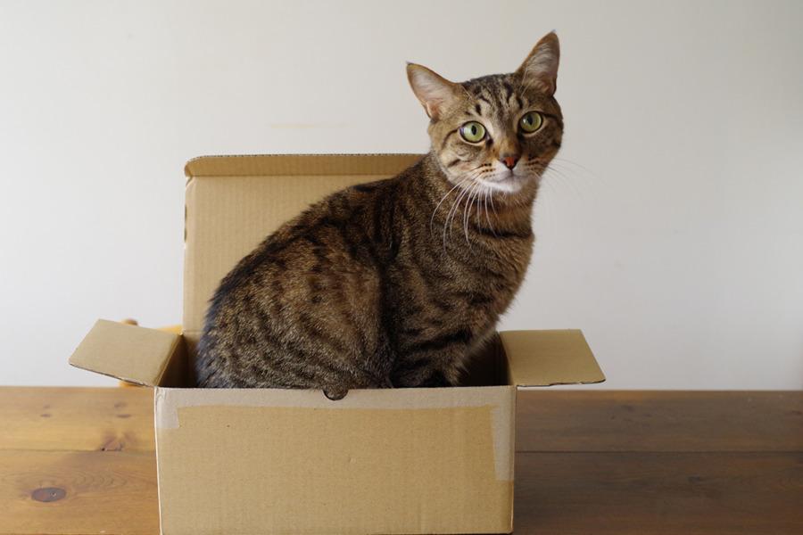 箱に座ってみる虎ノ介