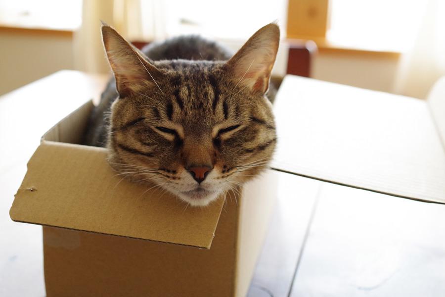 箱にはいって寝る虎ノ介
