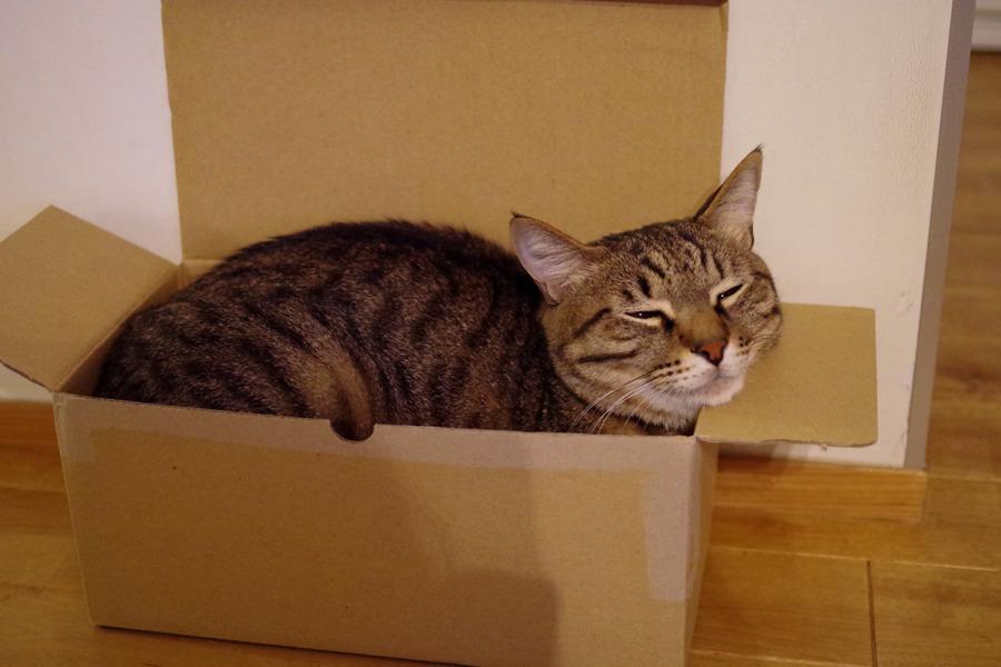箱にはいってご満悦な虎ノ介