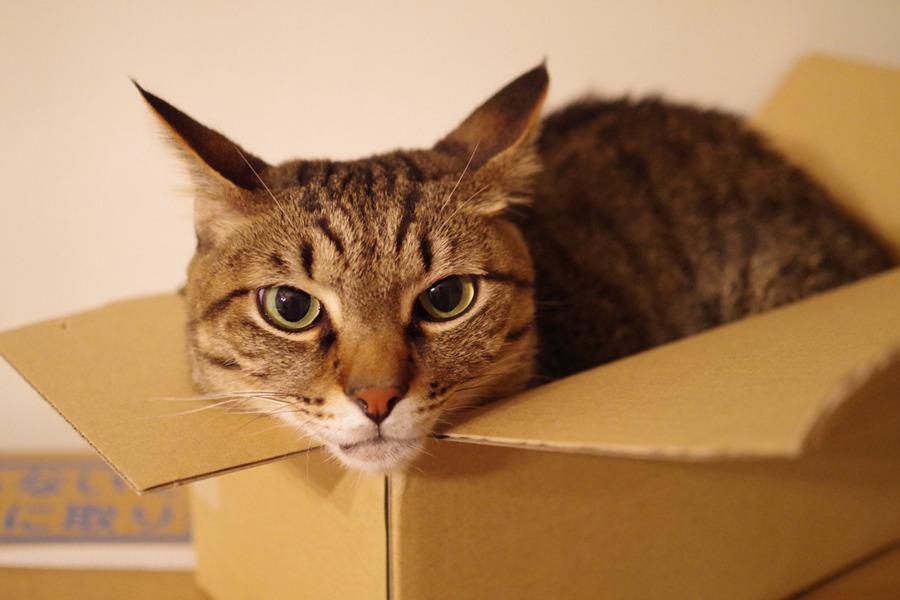 ベッドからでてきて箱に入る虎ノ介