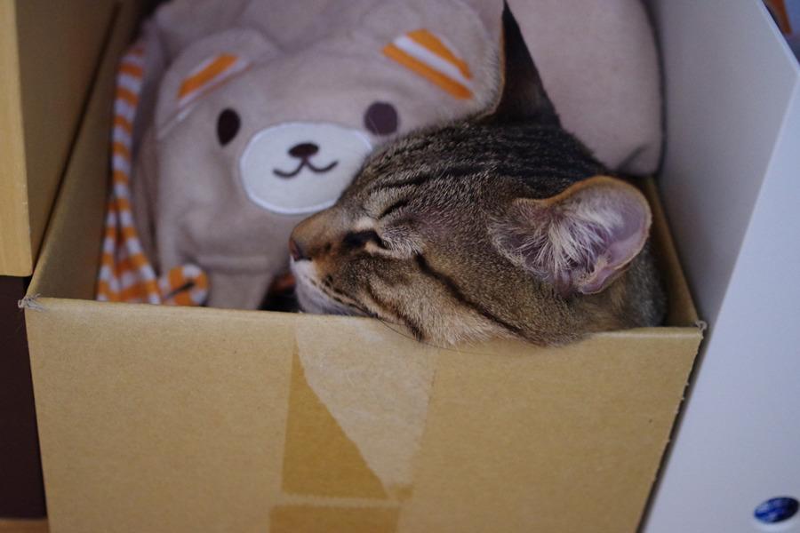 箱の中出タオルケットをかぶって眠る虎ノ介