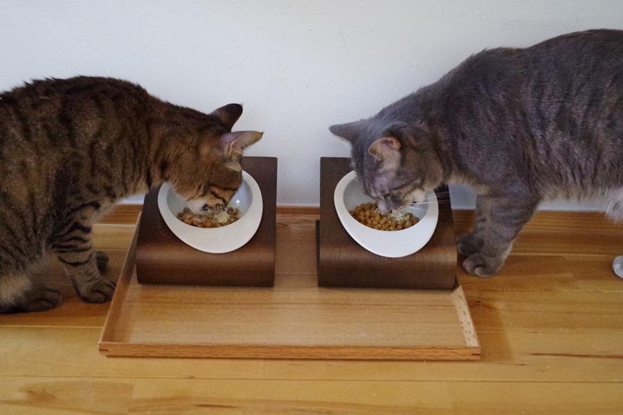 ご飯を食べる虎ノ介と春太
