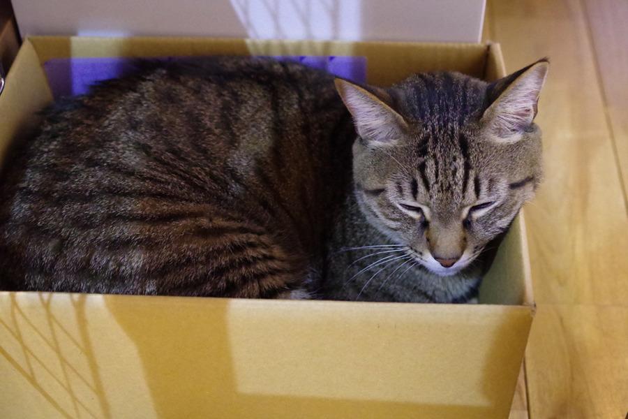 箱の中で眠る虎ノ介