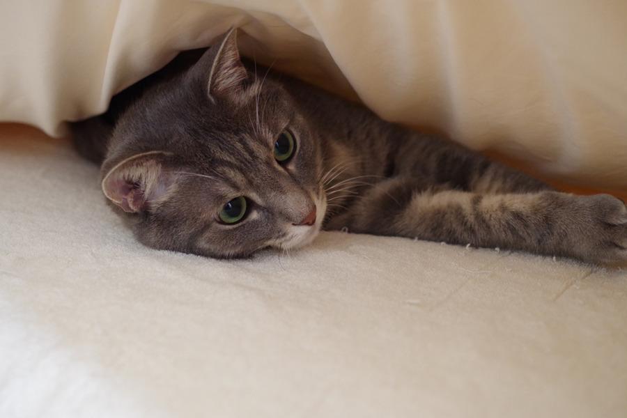 ベッドで眠る春太