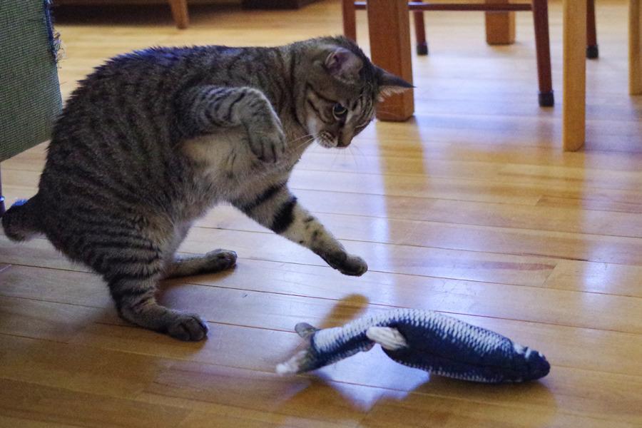 動く魚のおもちゃに興味がある虎ノ介