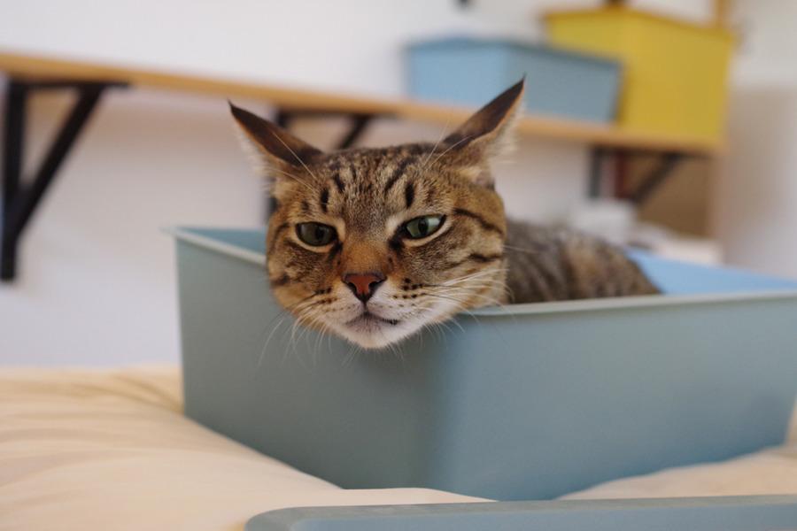 箱にはいっていたら眠くなった虎ノ介