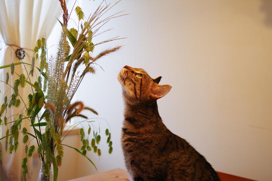 草を見上げる虎ノ介