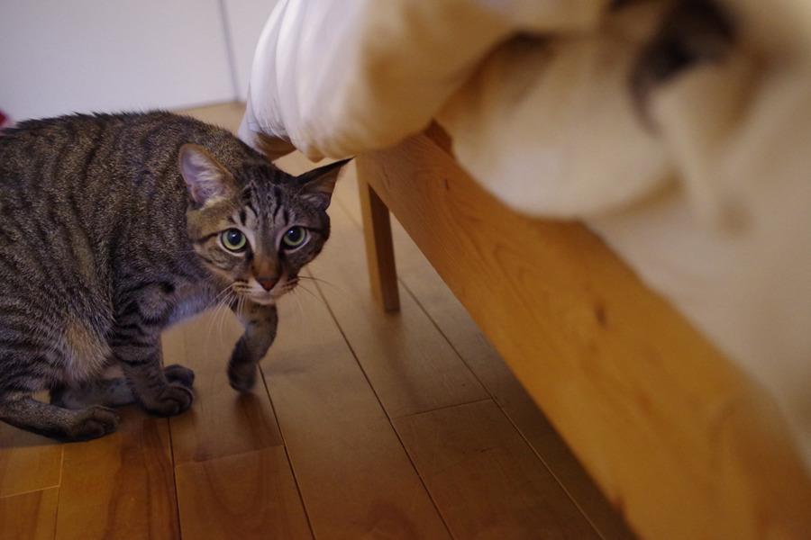 警戒しつつベッドに近寄る虎ノ介
