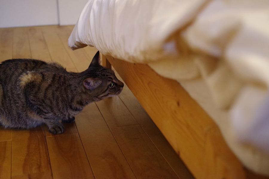 ベッドの中の気配を警戒する虎ノ介