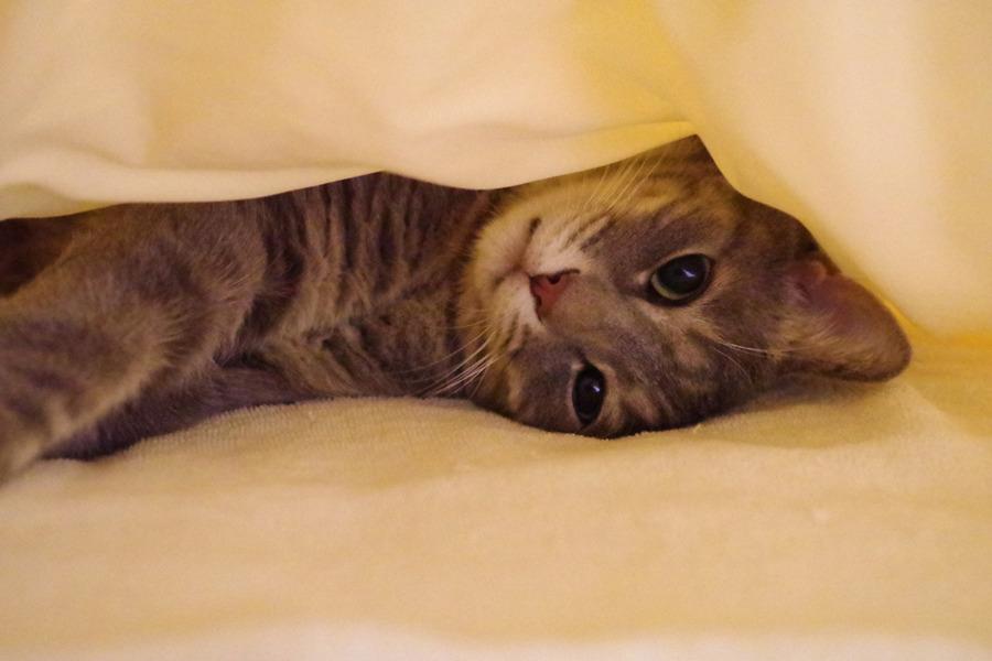 お布団の中で眠る春太