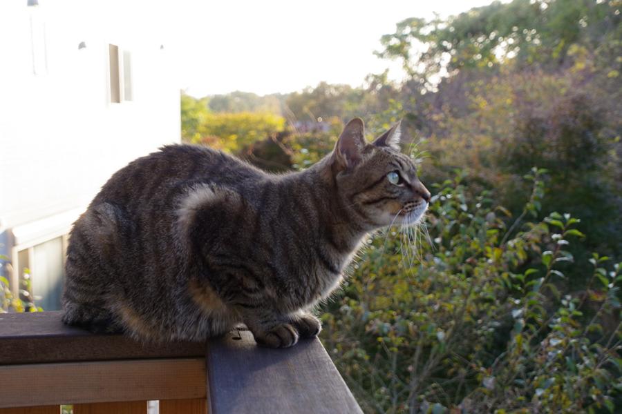 ベランダで日差しを浴びながら鳥を見る虎ノ介