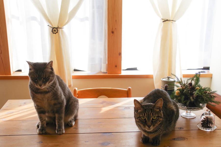 並んで座る虎ノ介と春太