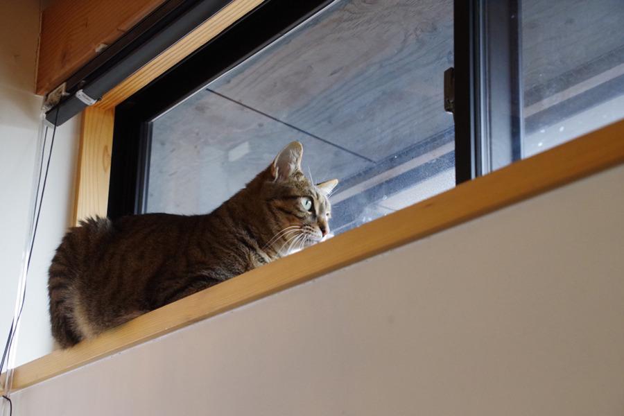 窓辺から外をチェックする虎ノ介