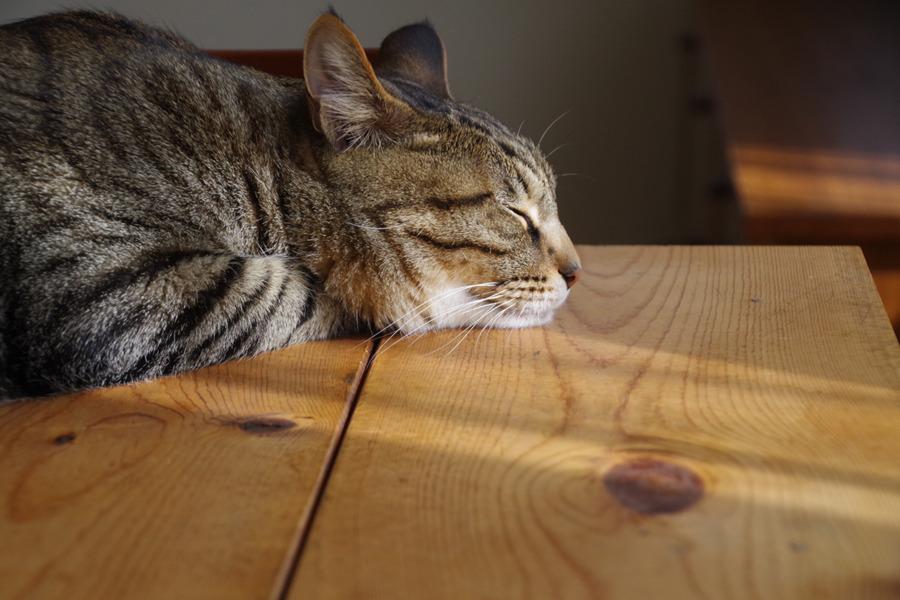 のんびり眠る虎ノ介